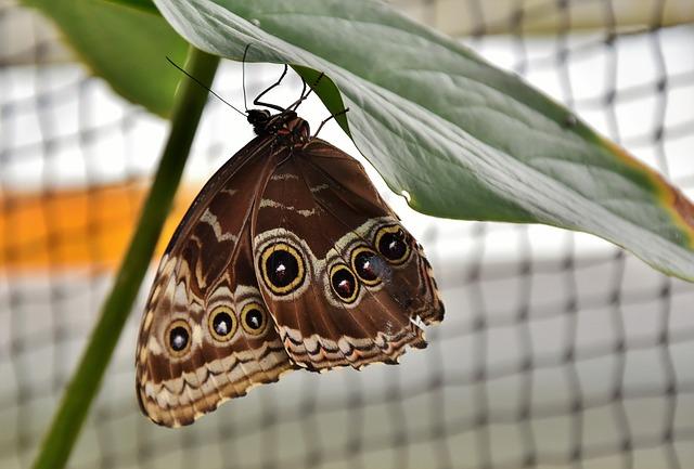 butterfly-3216520_640